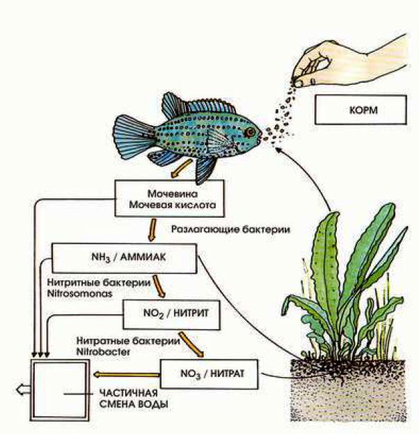 Каждому известно, что вода может быть разного качества и обладать разными свойствами.
